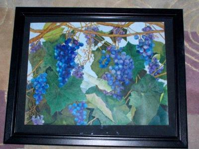Concord grapes SOLD