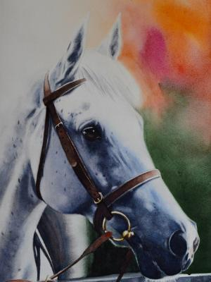 The beauty of the Arab Horse, 38cm x 56cm, 2019