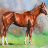 The beauty of the Hannoverian horse, 38cm x 56cm, 2021