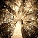 Palm...