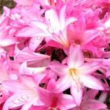 Explosively Pink