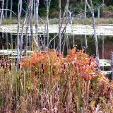audubon pond