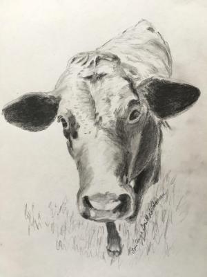 Rosie, Pet Cow