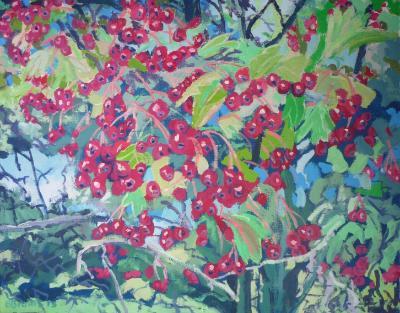 Hawthorn berries on Dartmoor