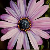 Still life & Florals