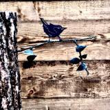 Pound In Birds