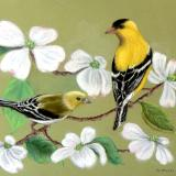 Goldfinches and White Dogwood
