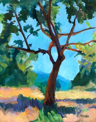Tree, Study
