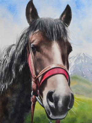 The beauty of the Kabardian Horse, 35cm x 50cm, 2019
