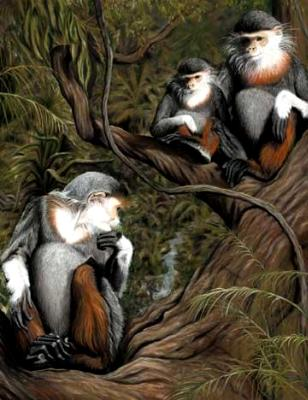 Endangered Vantage Point: Northern Douc Langurs