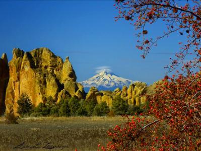 Mt. Jefferson & Red Berries