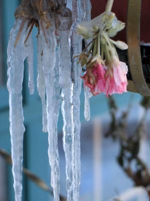 Wisconsin  Freeze
