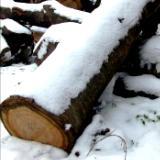 Spotlight VIII - Winter