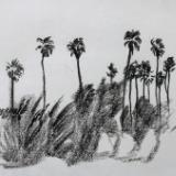 Row of Palm Trees, Alameda