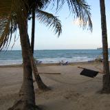 tropical lazy days