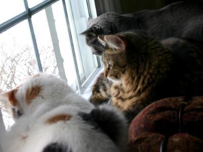 Window gazing