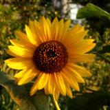 Inhale (Flowers)