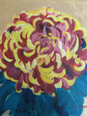 Chrysanthemum Abbreviated
