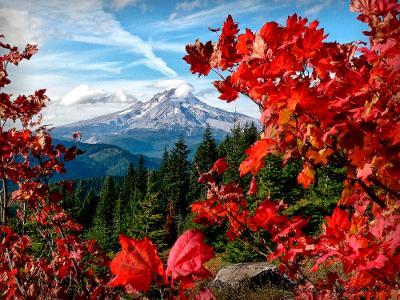 Fall Colors of Bonnie Meadows Frame Mt. Hood