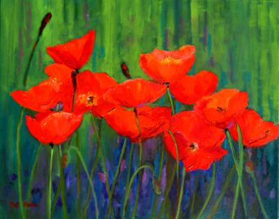 Red Poppies  oil  16x20