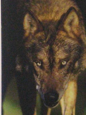 Wolf Sanctuary photograph