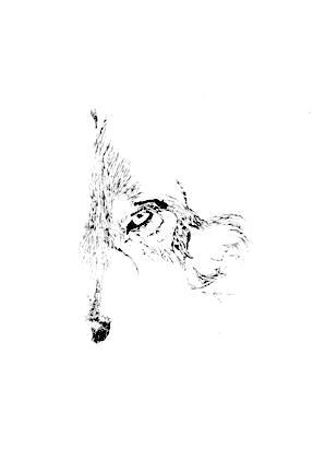 Sui Conrad ~ WolFyre Press