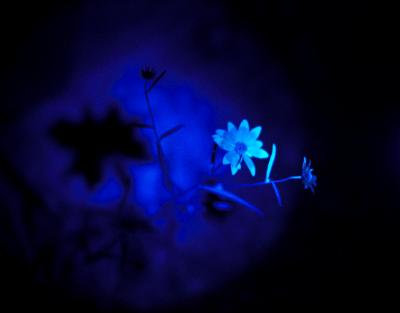 Midnight Flora #1