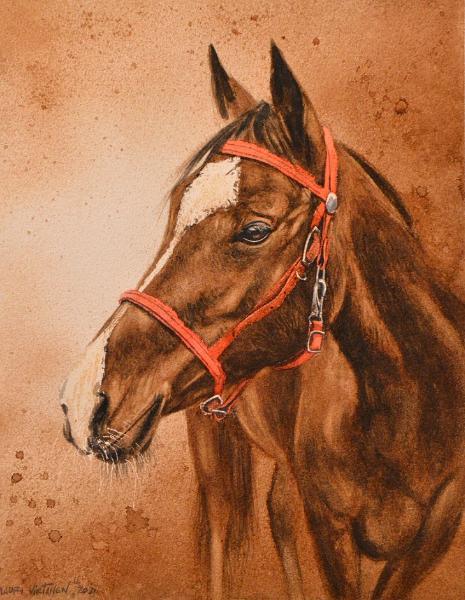 Colt, coffee painting & watercolor, 38cm x 28cm, 2021