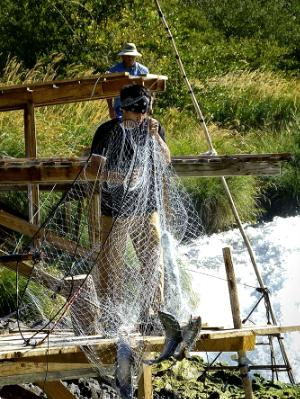 Netting on the Deschute's Close-Up