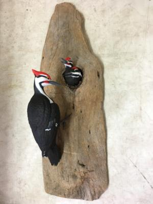 Life size Pileated Woodpecker and Fledglings