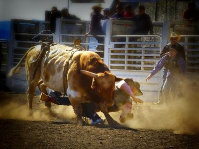 Middle of a Rodeo Bull Ride Short Story