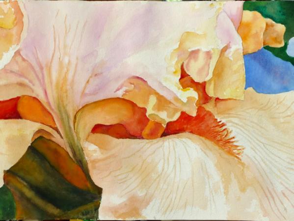 Slice of an apricott Iris