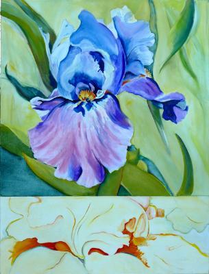 Iris in split format