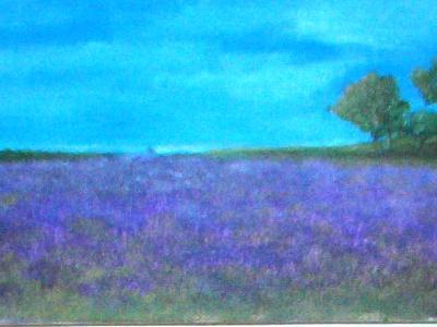 purple fields of the Alentejo