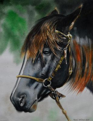 The beauty of the Colombian Criollo Horse, 38cm x 56cm, 2020