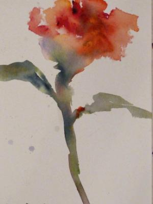 Sweet Red Rose