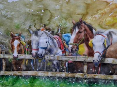 Horses behind the fence, 35cm x 50cm, 2014