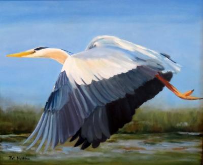 Great Blue Heron in Flight - oil - 20x24