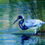 Tri-Colored Heron - oil - 16x20