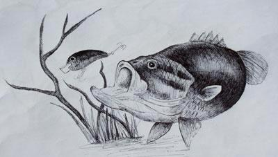Large Mouth Bass Drawings By Frank Mitchum Inc