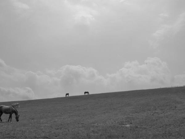 David Lee Black, horse
