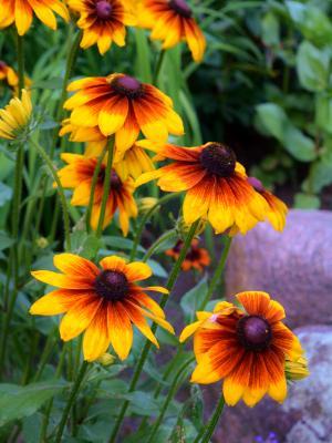 Lena's Garden 14