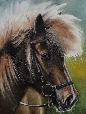 The beauty of the Viking (Icelandic) horse, 38cm x 28cm, 2020
