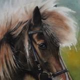 Watercolor horse portraits