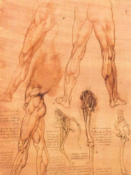 Studies Of Legs Of Man And The Leg Of A Horse Leonardo Da Vinci