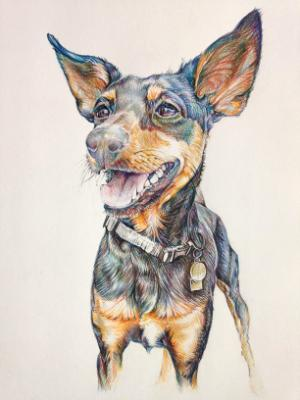 Jack's boy's dog