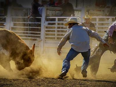 The Short Story of a Rodeo Bull Ride Ends