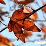 Spotlight VII - Autumn