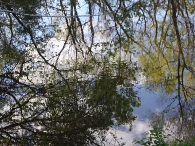 Trees on Pond
