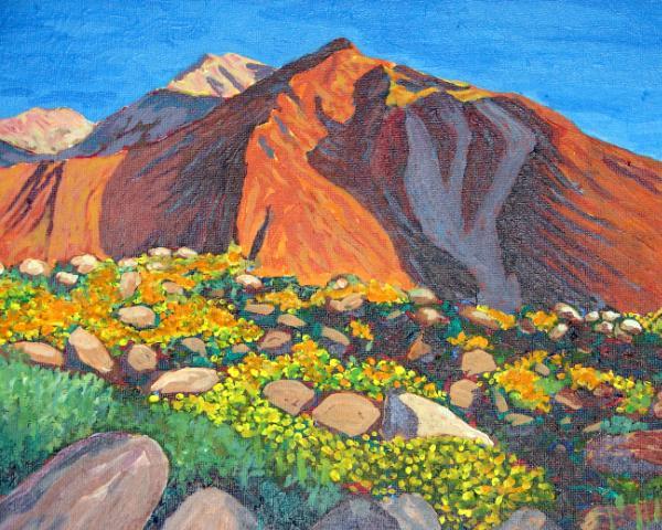 Borrego Springs Desert flower bloom